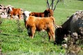 Cow moments on the pasture!