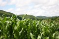 Corn and Mountians!