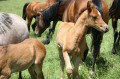 Spring Foals in June